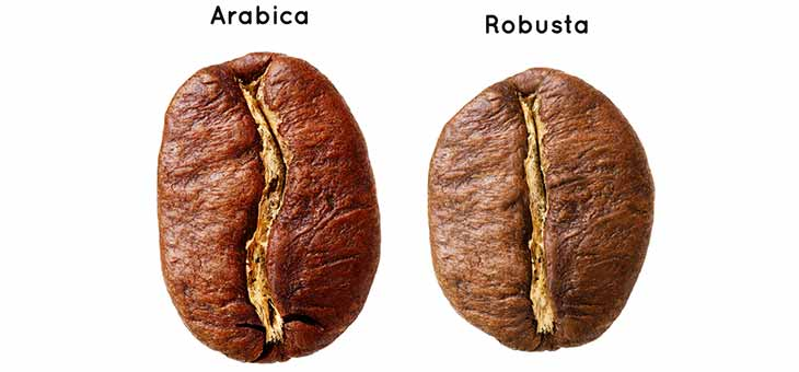 Coffee Arabica and Coffee Robusta